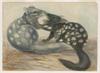 Series 02: Gerard Krefft album of watercolour drawings, ca. 1857-1858, 1861, 1866