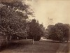 Botanic Gardens [Sydney / attributed to the New South Wales. Government Printing Office]
