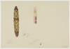 Series 01 Part 04: Pencil & watercolour drawings from the Sir Walter Baldwin Spencer papers, ca. 1880-1929