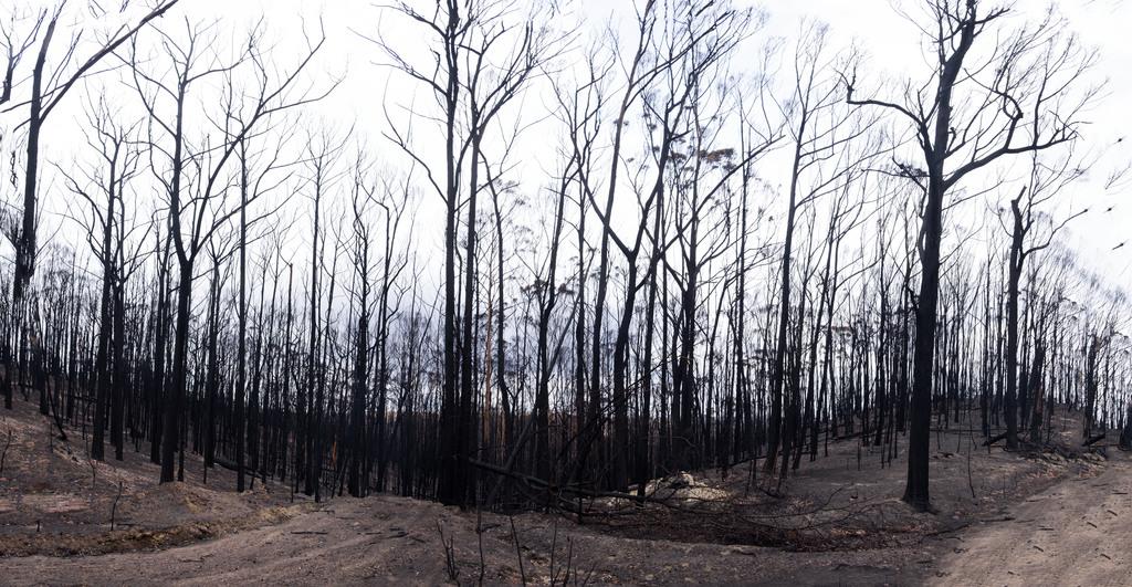Item 16: Upper Kiah Road, leading to Annette Evelyn's burnt property, 19 January 2020