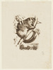 [The common opossum or phalangista vulpina] / [attributed] Helena Forde