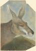 [Kangaroo Head] / by Gerard Krefft, 1861