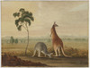 [Male and female red kangaroo in a Liverpool Plains landscape, ca. 1819 / attributed to J.W. Lewin]