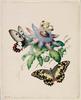 [Butterflies with passionfruit flower], 1854 / Helena Scott